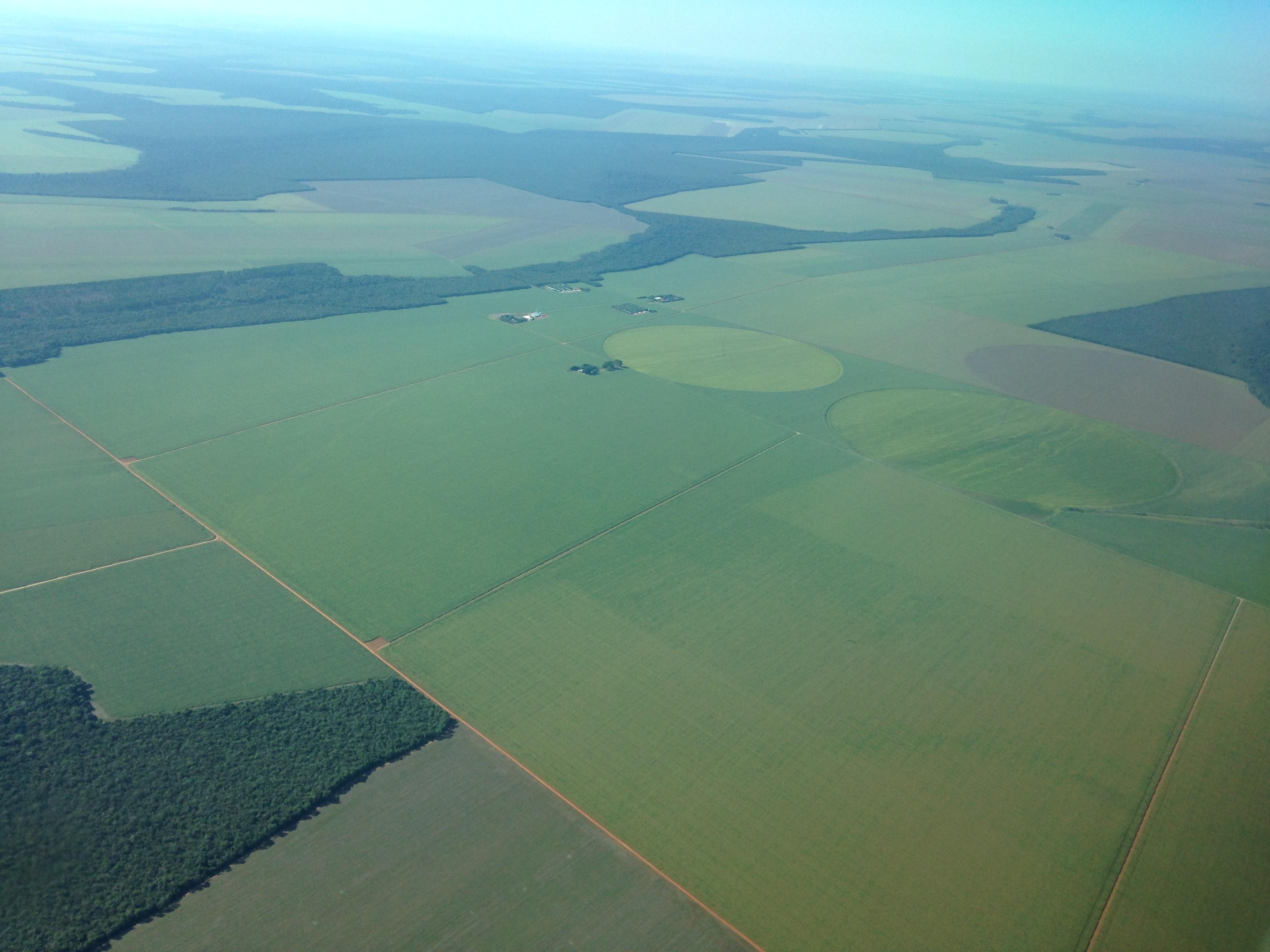 Lots of soybean fields